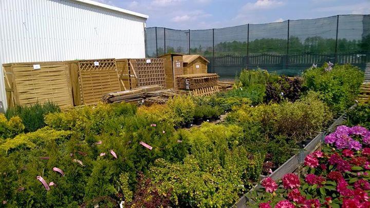 ogród1