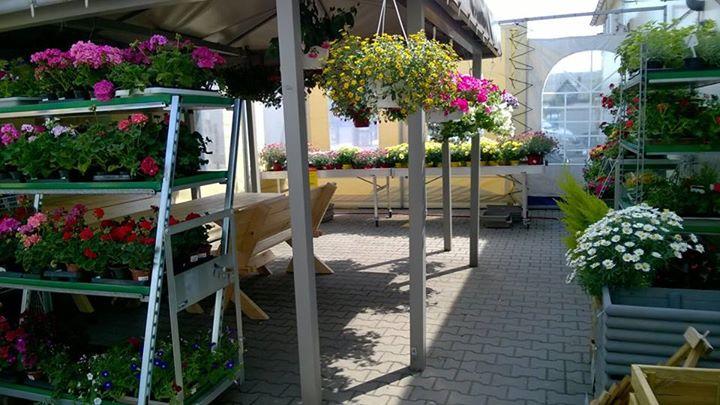 ogród6