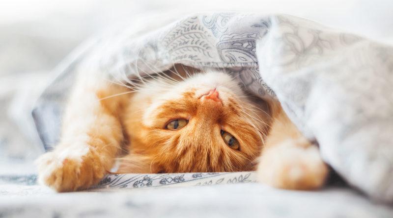 Kociak w domu