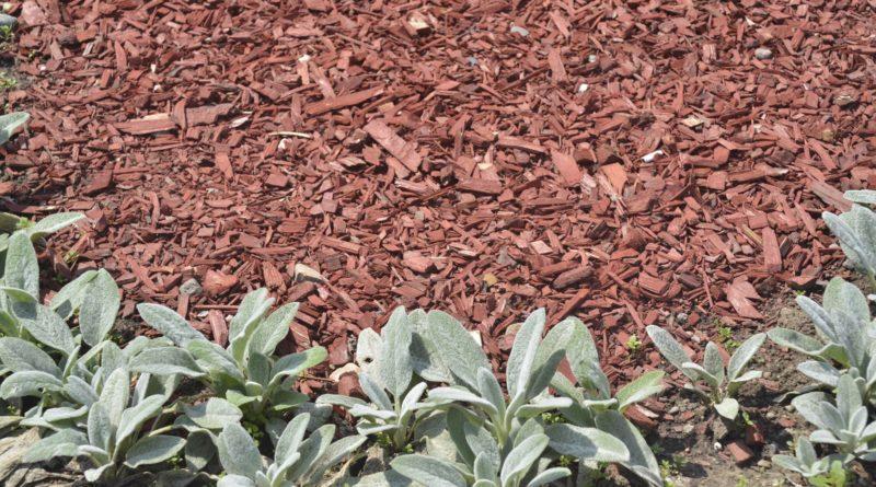 Kora ogrodowa - rodzaje i zastosowanie